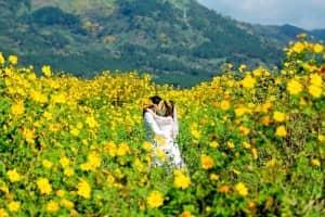 Khám phá những địa điểm chụp hình hoa dã quỳ ở Đà Lạt