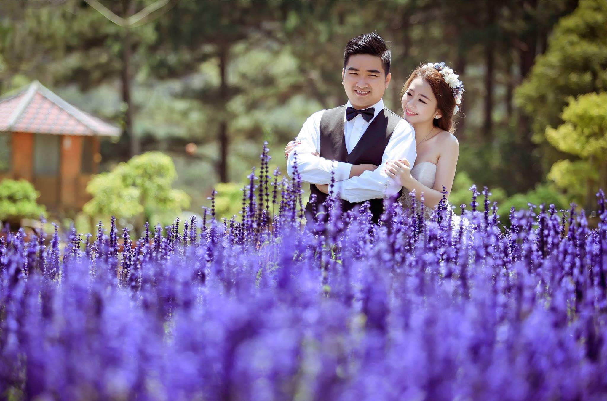 Vườn hoa Lavender