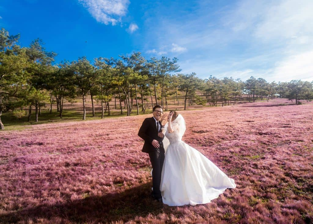 đồi cỏ hồng