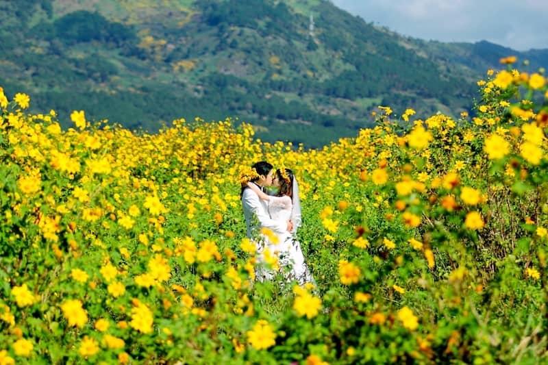 chụp hình cưới hoa dã quỳ ở Đà Lạt